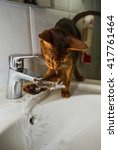 Small photo of Abyssinian cat drinks water from the tap