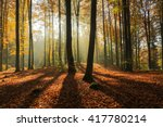 autumn forest in north poland... | Shutterstock . vector #417780214