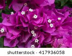pink leaves with white flowers 1 | Shutterstock . vector #417936058