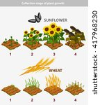 collection of plant growth... | Shutterstock . vector #417968230