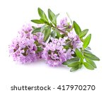 thyme flowers in closeup | Shutterstock . vector #417970270