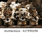 The Animal Heads For Sale In...