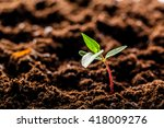 growing young green corn... | Shutterstock . vector #418009276