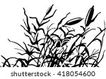 Reed Vector Illustration....