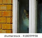 I Am Watching You. Stalker Cat