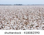 cotton fields ready for... | Shutterstock . vector #418082590