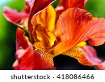 beautiful red iris closeup | Shutterstock . vector #418086466