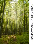 sunshine in the beech forest | Shutterstock . vector #418124023