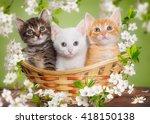 Three Multi Colored Kitten...