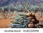pineapple field. young...   Shutterstock . vector #418220098