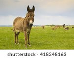 Small photo of Drove of donkeys restingin the green meadow