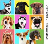 dogs and cats portraits on...   Shutterstock . vector #418262314