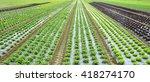 fresh salad fields | Shutterstock . vector #418274170