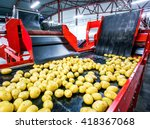 Potato Sorting  Processing And...