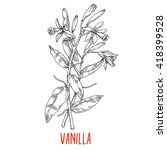 vanilla  spice with flowers and ... | Shutterstock .eps vector #418399528