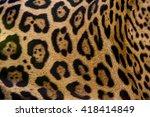 Beautiful Fur Pattern Of A...