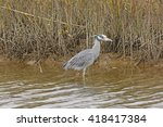 Yellow Crowned Night Heron In...