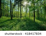Sunlight In A Green Forest....