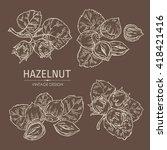 vector set  hazelnut. hand drawn | Shutterstock .eps vector #418421416