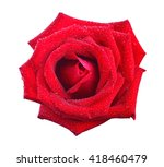 Stock photo red rose isolated on white background 418460479