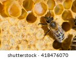 a queen bee cup with royal... | Shutterstock . vector #418476070