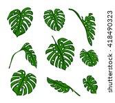 a set of botanical tropical...