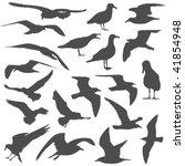 seagull silhouettes | Shutterstock .eps vector #41854948