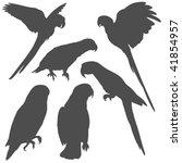 parrot silhouettes | Shutterstock .eps vector #41854957