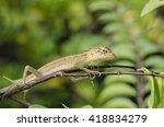 wild lizards | Shutterstock . vector #418834279