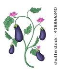 botanical illustration of the... | Shutterstock .eps vector #418866340
