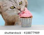 Cat Eating A Cupcake