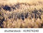 photographed close up of... | Shutterstock . vector #419074240