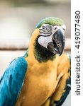 blue and gold macaw on the... | Shutterstock . vector #419077480
