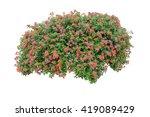 flower bush isolated on white... | Shutterstock . vector #419089429