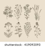 Vector hand drawn collection of medicinal, cosmetics herbs. St. John