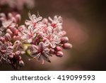 Soft Pink Colors From The...