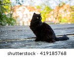 Stock photo black cat standing 419185768