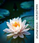 beautiful waterlily or lotus... | Shutterstock . vector #419207494