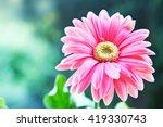 gerbera flower | Shutterstock . vector #419330743
