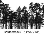 Pine Trees Forest Isolated On...