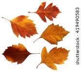 oil draw set of viburnum... | Shutterstock . vector #419490583