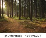 Wooded Forest Trees Backlit By...