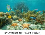 underwater coral reef with... | Shutterstock . vector #419544034