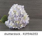 Hydrangea Flowers On Wooden...