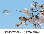 Sparrow Sitting On Beautiful...