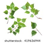 Birch Leaves Set Isolated On...