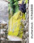 Small photo of Europe, Balkans, Montenegro, Kotor, Unesco site, alley cat