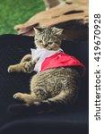 Stock photo cat wearing baby nursery 419670928