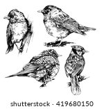 Set of hand drawn birds.
