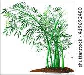 bamboo tree and bamboo shoot...